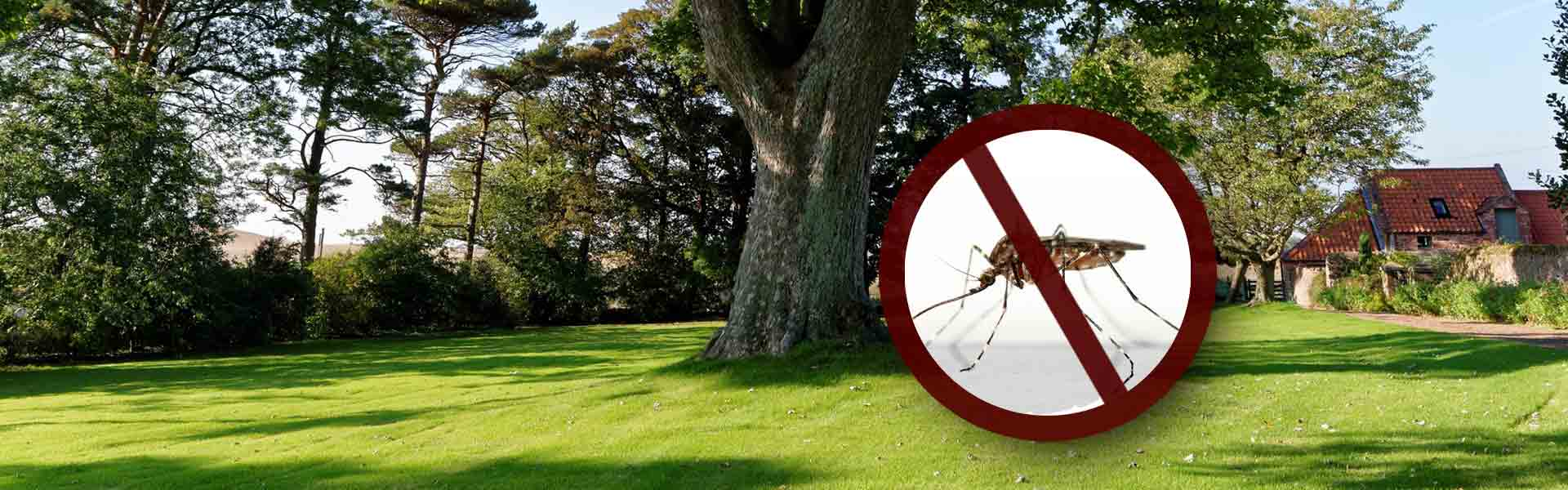 Mosquitoe Removal Services